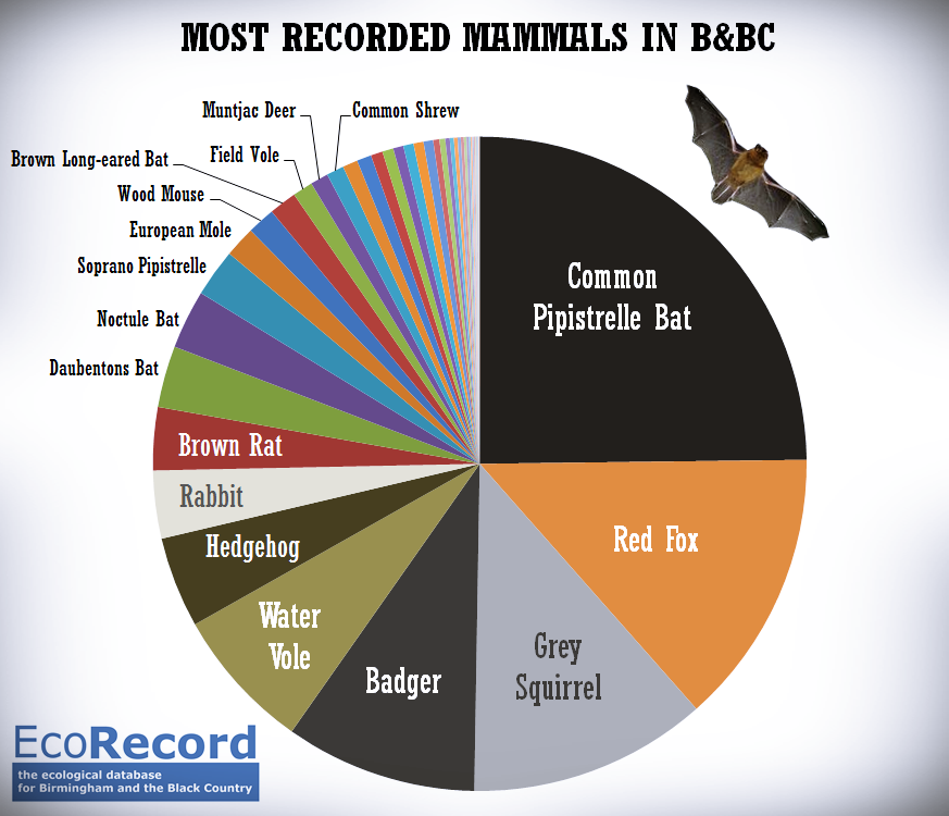 Most Recorded Mammals in B&BC